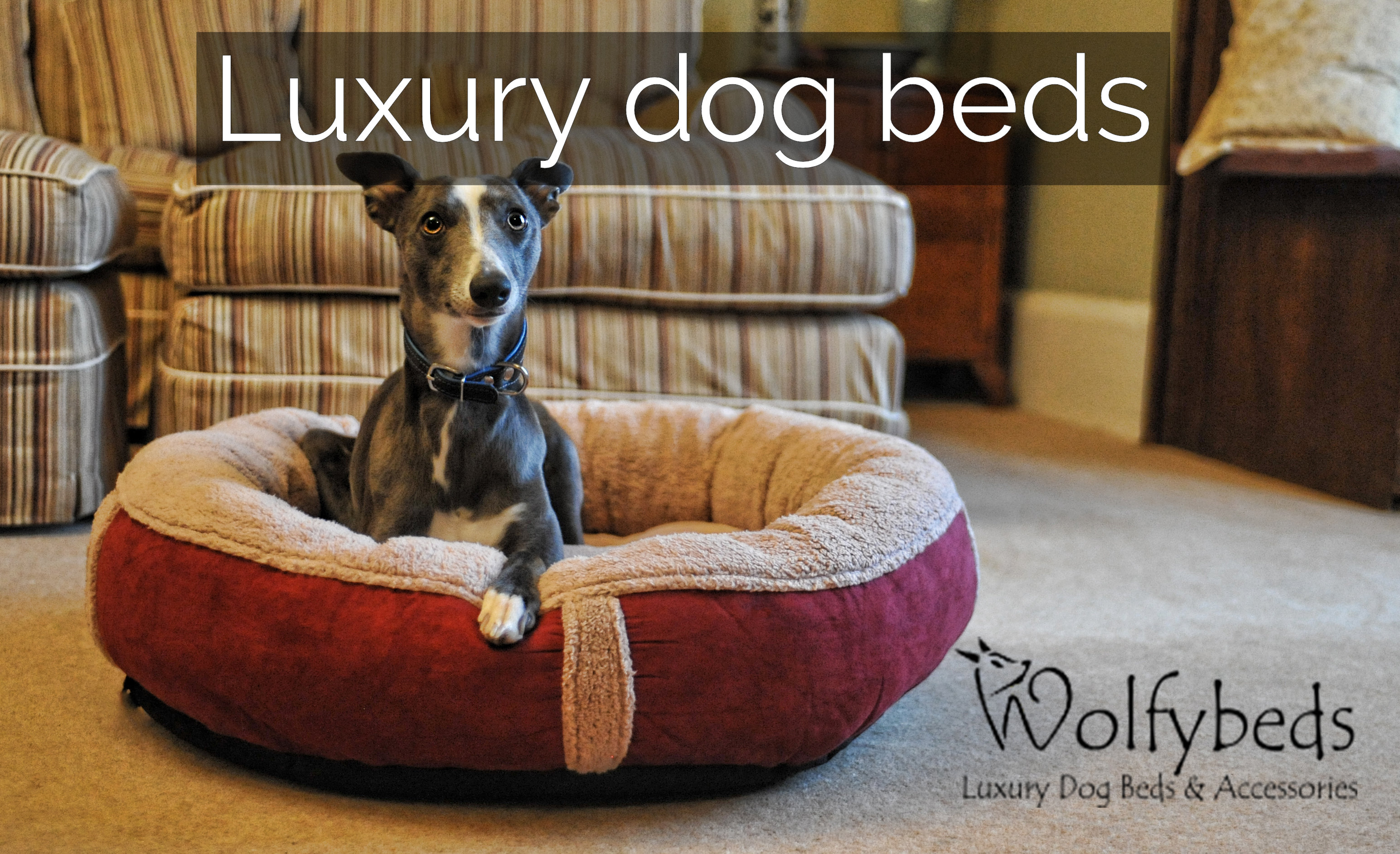 wolfybeds luxury dog beds and accessories. Black Bedroom Furniture Sets. Home Design Ideas
