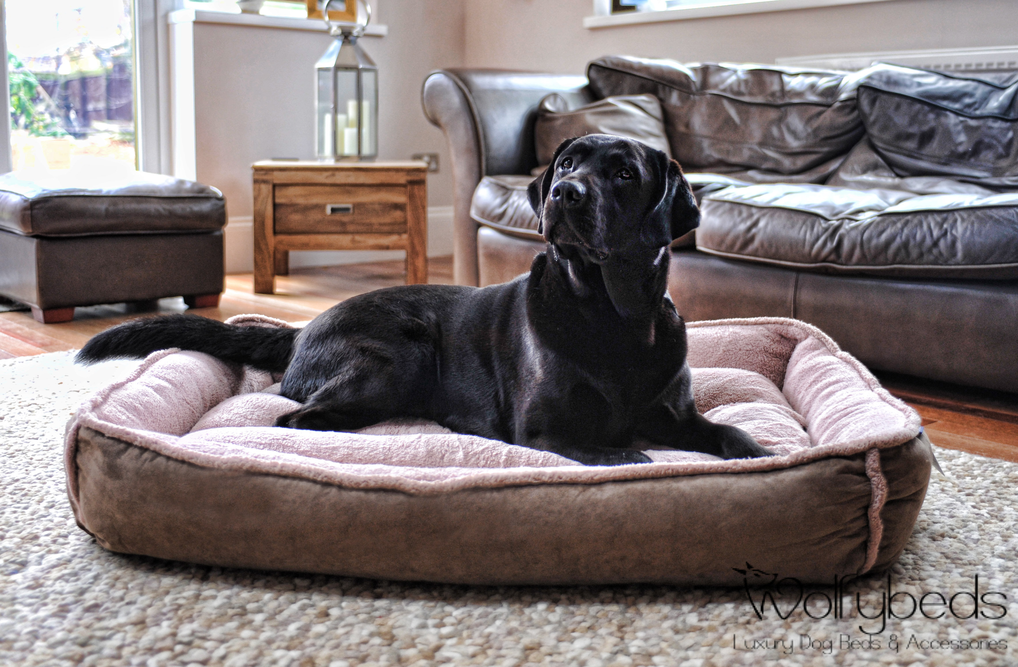 Large Luxury Dog Beds Amp Accessories Uk Wolfybeds