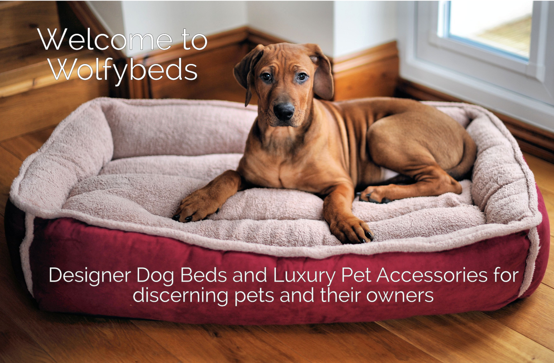 designer dog bed furniture. Welcome To WolfyBeds Designer Dog Beds And Luxury Pet Accessories For Discerning Pets Their Owners Show Me More Bed Furniture